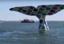 Arcachon: L'Equipage SNSM - Bordeaux Surf TV