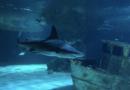 Requins de l''Océarium du Croisic - Euskadi Surf TV