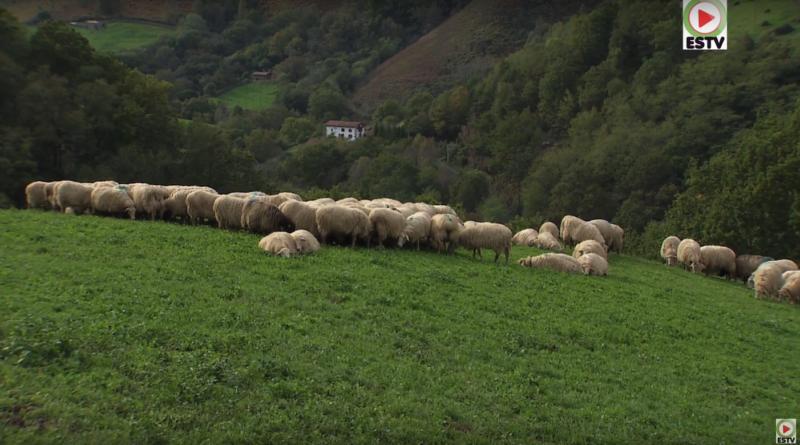 Bidarray: Les Brebis de Montagne - Euskadi Surf TV