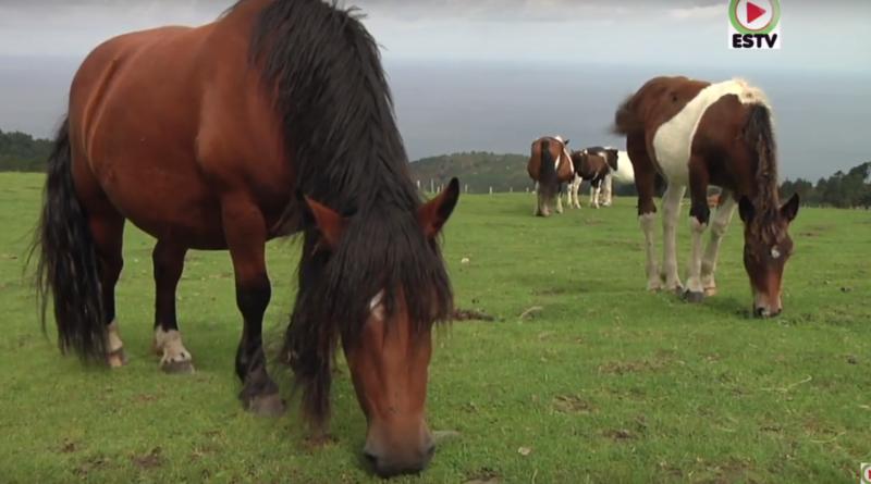 Le Pottok, petit cheval Basque - Euskadi Surf TV