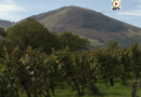 IROULEGUY | Les Vignes du Pays Basque - EUSKADI SURF TV